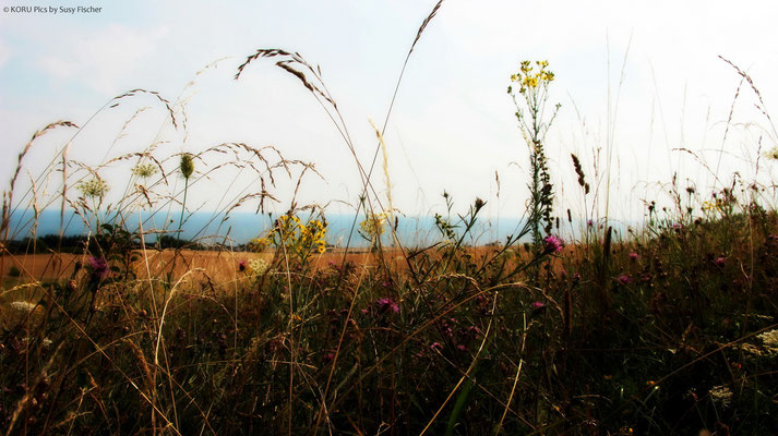 Sommerwiese in Dänemark