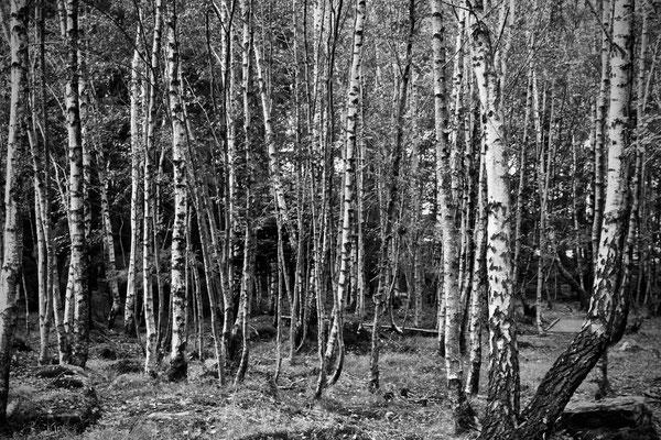 Wald auf Bru