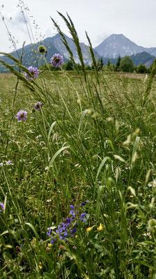 Wanderung zum Ischnighof: Mittagskogel