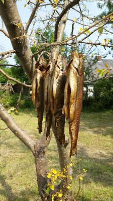 geräucherter Fisch: typisch, regional & lecker