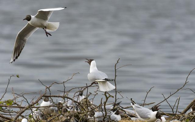 Hornboga Nature Reserve - Sweden