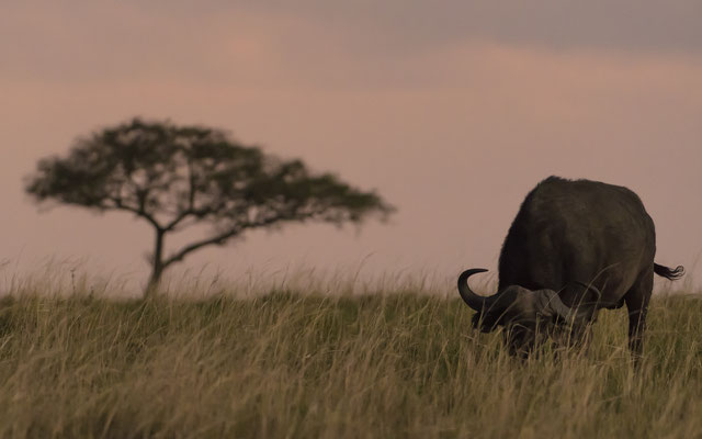 Sunset - Kenia / Maasai Mara