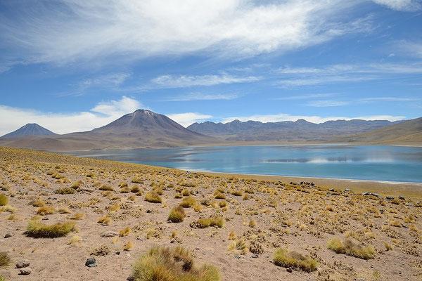 Laguna Miscanti - Atacama Desert