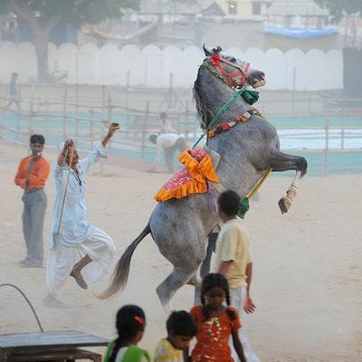 Camel Fair - Pushkar