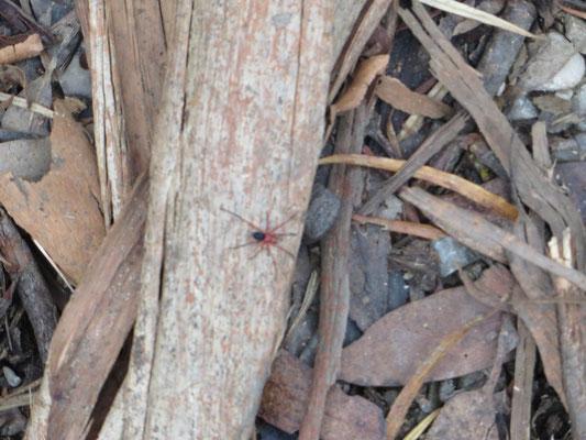 Unsere erste Spinne in freier Natur.