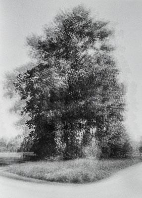 crossroad tree