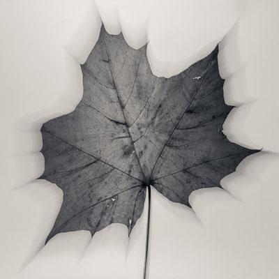 abstract nature IX