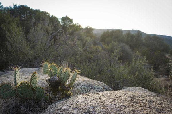 Erster Kaktus