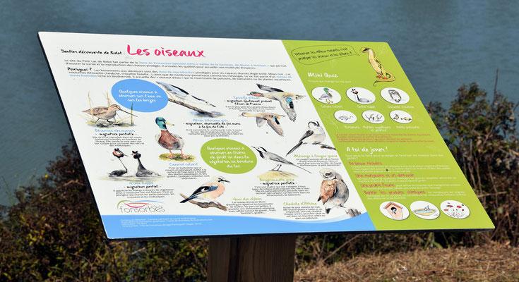 panneau d'interprétation, panneau pédagogique, ludique, illustration, illustré, nature, biodiversité