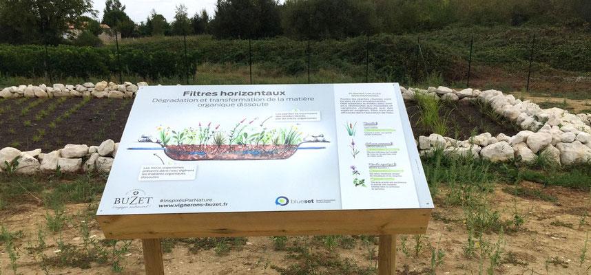 Illustration des filtres de phyto-épuration et flore associée