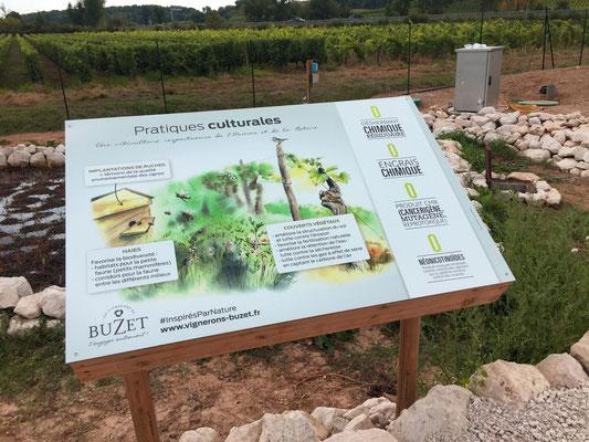 Illustration des pratiques culturales éco-responsables (ruche, prairie fleurie, zéro pesticide)