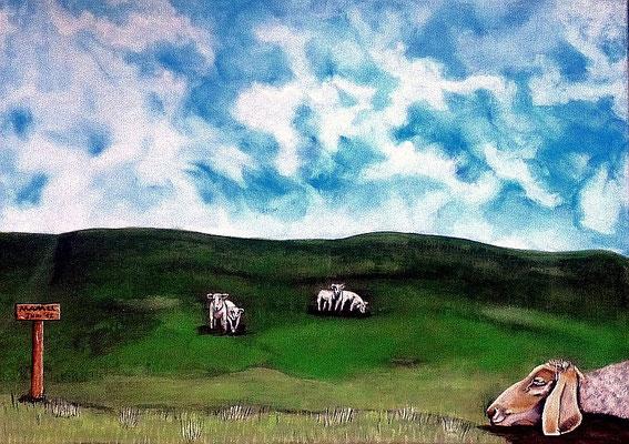 Dont disturb - 70 x 50 cm 280,-- Vielleicht zeigt das Werk einen grünen Deich und dahinter das blaue Meer? Ganz bestimmt stellt es grasende Schafe dar. Eines der Tiere döst friedlich vor sich hin und sollte keinesfalls gestört werden.