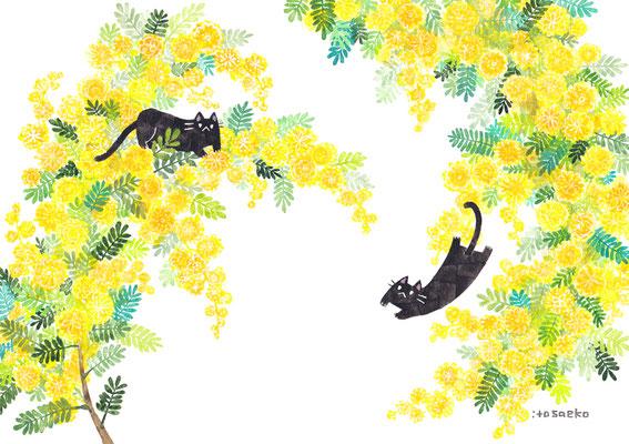「ミモザとネコ」B5/水彩絵具