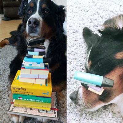 Carola (AUSTRIA) hat in Flynn die perfekte Home-learning Aufsicht gefunden