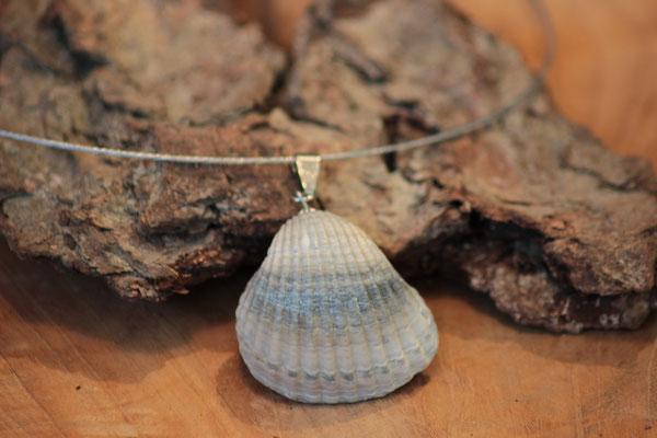 Muschel aus Sardinien