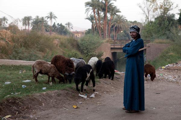 Goatherd, Luxor