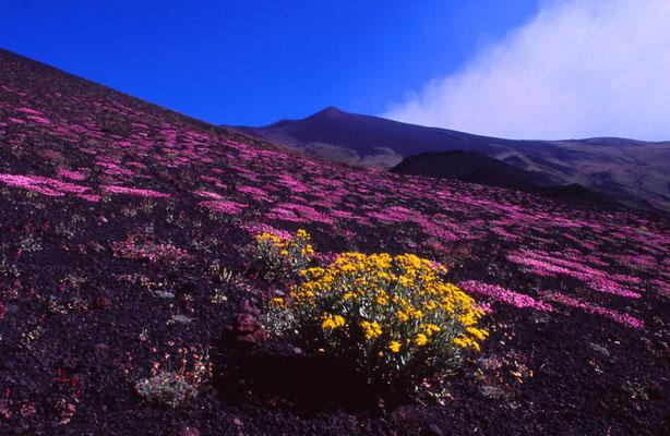 Cod. Etna 018