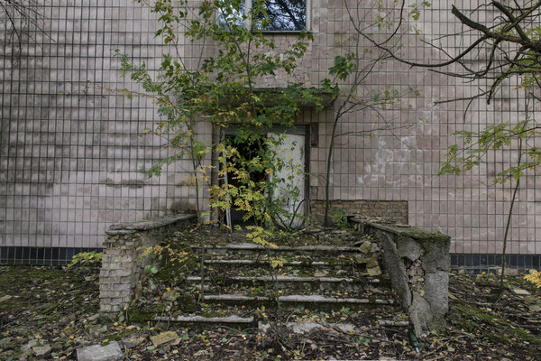 A tree grown in front of the hospital entrance in the ghost town of Pripyat.