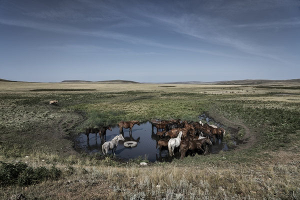 Breeding horses while grazing along the road leading to the polygon.