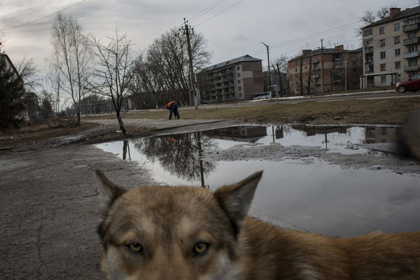A stray dog in Chernobyl town. Chernobyl Exclusion Zone.