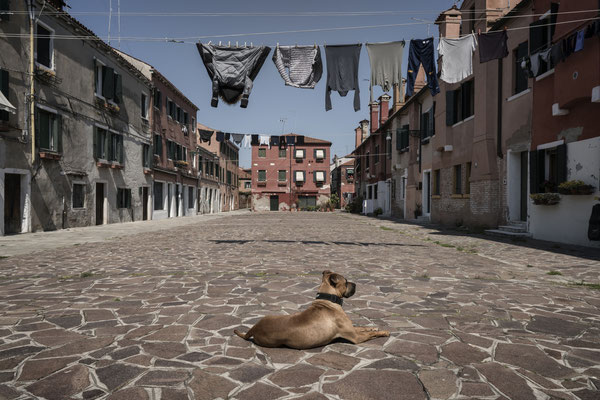 A dog sunbathes in an empty square. Court of the Cordami, Giudecca