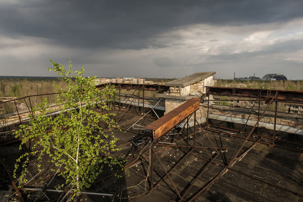 A tree grown on the roof of the Polessya hotel located in the abandoned city of Pripyat. In the background, the exploded reactor of the Chernobyl nuclear power plant.