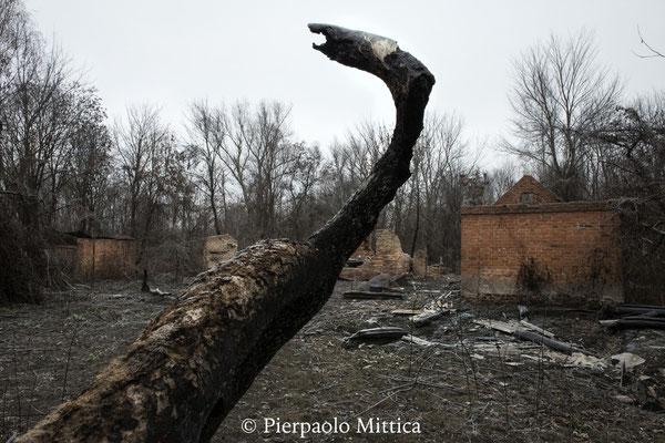 foresta e villaggio bruciati da un incendio, regione di Poljeske, zona di esclusione di Chernobyl