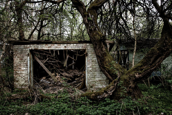 A house surrounded by nature in the abandoned part of the city of Chernobyl.