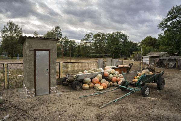 Pumpkin harvest, Radinka