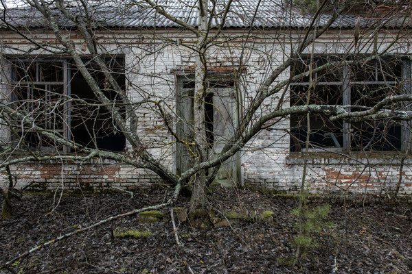 A tree grown in front of the entrance to an abandoned house in the town of Polesskoe, within the Chernobyl exclusion zone.