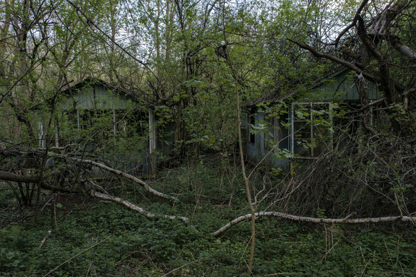 houses surrounded by nature in the abandoned part of the city of Chernobyl.