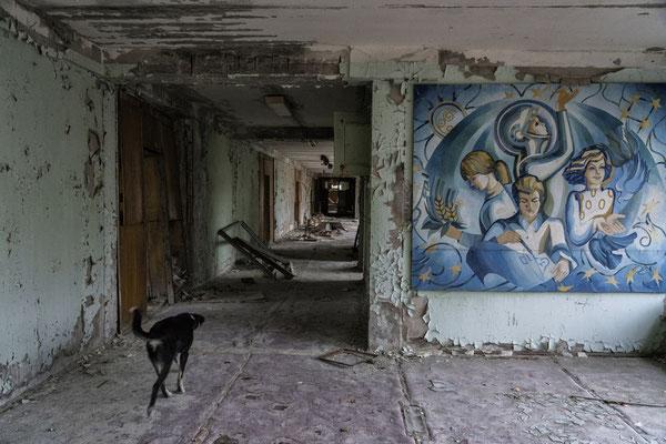 A stray dog wanders inside the abandoned city of Pripyat.