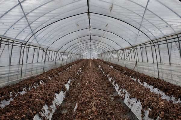 "Abandoned strawberries greenhouse, Fukushima ""No-Go Zone"", Japan."