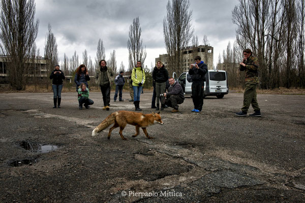 Tourists while watching a fox in the main square of Pripyat, exclusion zone