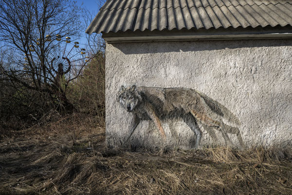 A graffiti in the ghost town of Pripyat depicting a wolf, one of the most widespread species in the Chernobyl exclusion zone.
