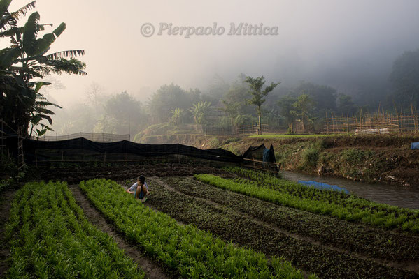 Cultivated fields, Mae La Refugee Camp, Thailand.