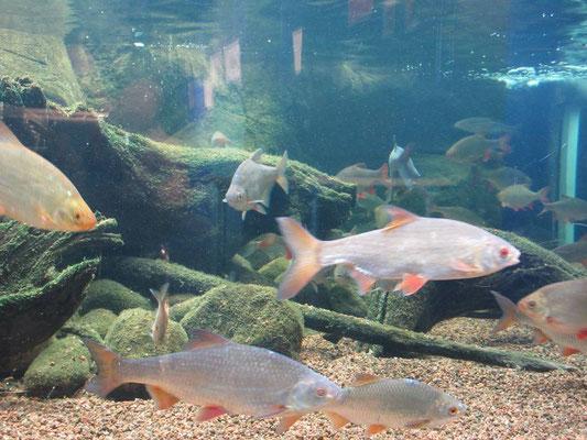 Das Aquarium von Kotka hat nur einheimische Fische, schön gemacht