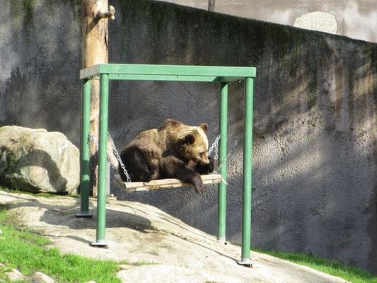 Verspielter Bär im Zoo von Ähtari