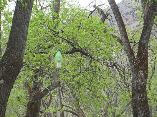 Petflaschen Recycling
