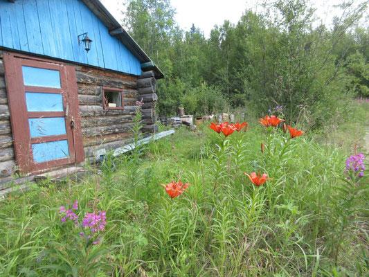 Vor der unbewohnten Datscha blühen die schönsten Blumen