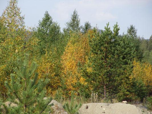 Im nördlichen Kasachstan färben sich die Blätter schon Ende August