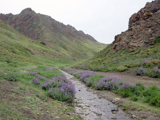 Zu Beginn ist der Fussweg zum Yolyn Am Canyon noch breit