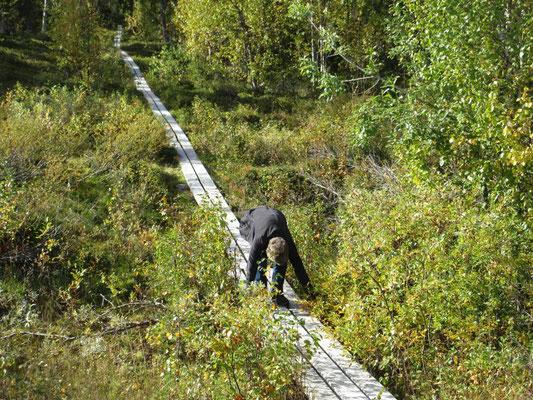 Ist der Steg über den Sumpf breit genug für den Rollstuhl?