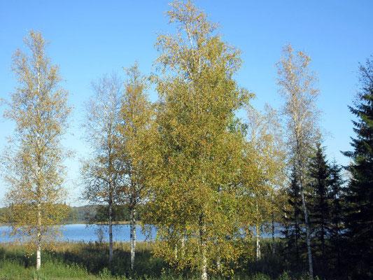 Ende September, auf unserer 10km Wanderung um den Pühajärv See im estnischen Nationalpark Otepää