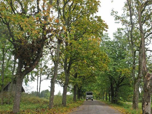 Mitte September auf Nebenstrassen im Norden Estlands