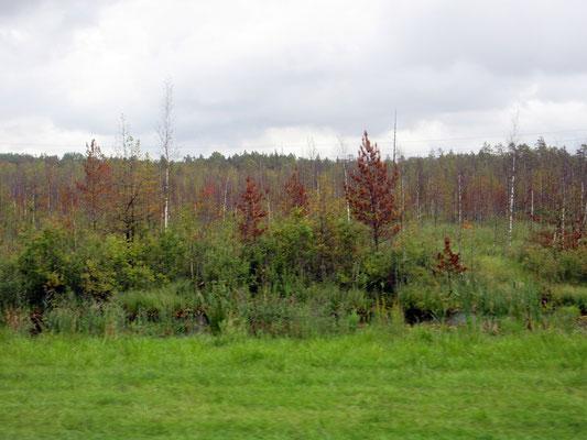 Es wird Herbst in Russland. Mitte September bei St.Petersburg