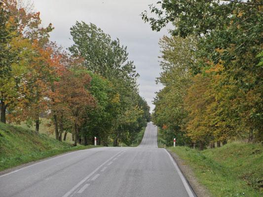 Wir fahren im Oktober in Polen durch den goldigen Herbst