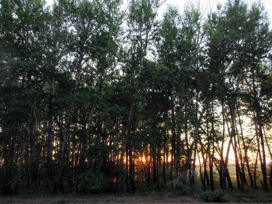 Sonnenuntergang bei unserem letzten Stellplatz in Kasachstan vor der Russischen Grenze