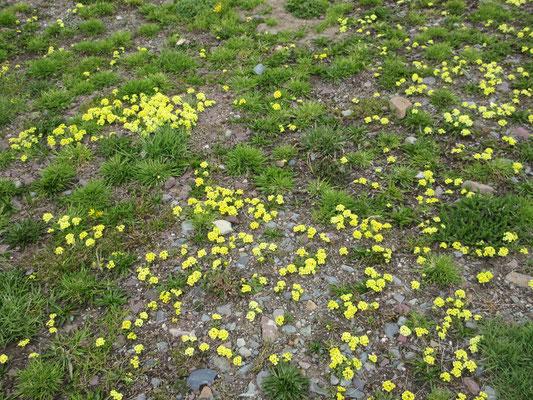 Der Schnee ist erst seit dem 1. Juni weg und die ersten Blumen sind schon zu sehen