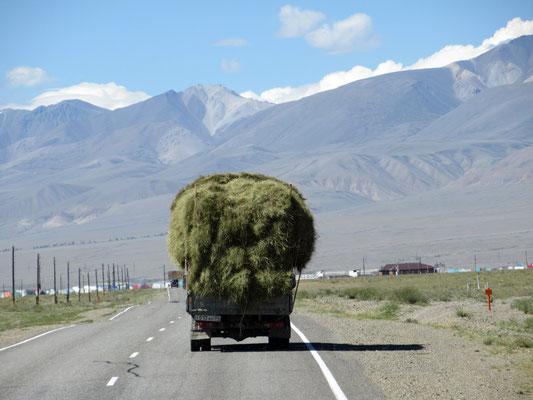 In Russland wird das Heu auf Lieferwagen verlanden und mit mindestes 60 km/h transportiert